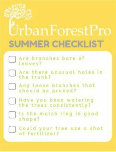 summer tree care checklist urban forest pro
