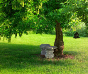 summer tree care tips urban forest pro