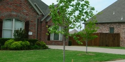 Tree Planting Aftercare, fertilizing trees