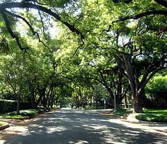 thumb_street trees3
