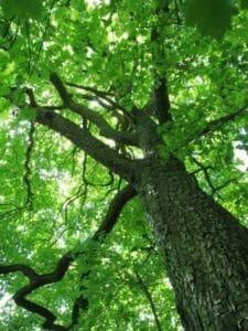 Trees Clean Air