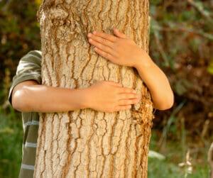 tree hugger urban forest pro portland arborist