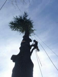 tree-removal-from-below
