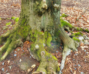 tree trunk and root diseases tree health urban forest pro