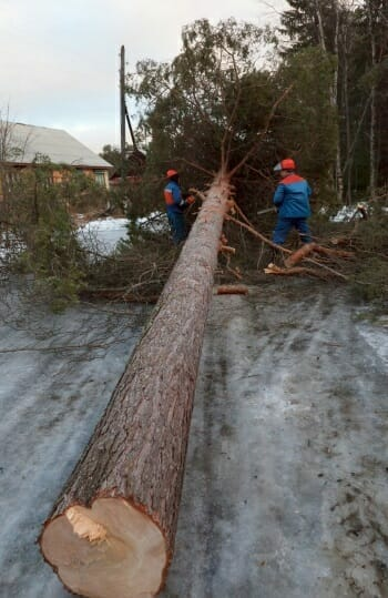 Tree removal in winter
