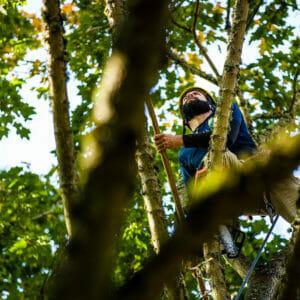 Portland tree cabling