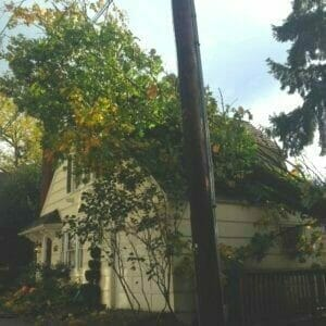 tree falls from neighbors property who is liable portland tree trimming & removal
