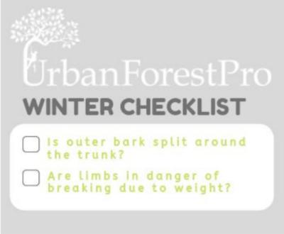 winter tree care checklist urban forest pro